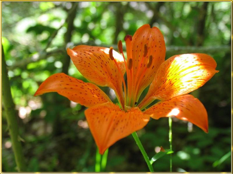 Tuttocoltelli leggi argomento piante e fiori for Piante e fiori